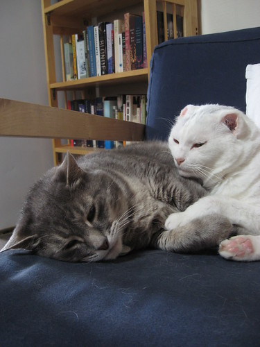 Two cats lying together on a chair; Mr Shadow, a grey tabby, to the left, and Mr. Bell to the right. The chair is clue, and bookshelves can be seen in the background.