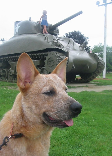 3fer - tank, girl, puppy