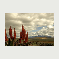 Uniondale Aloes (pho_kus) Tags: mountain clouds southafrica aloes uniondale theperfectphotographer
