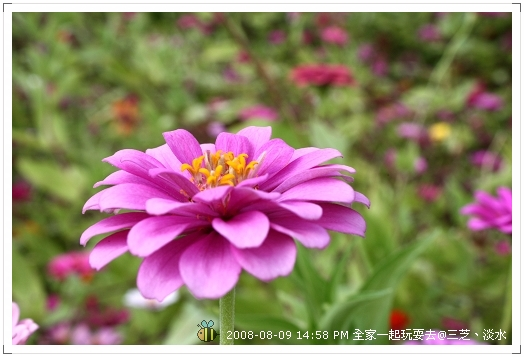 20080809三芝淡水全家遊 (3)