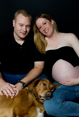 Dog on that's a big belly! (Orlando Photo Chic) Tags: family dogs jill tiger pregnancy charles pregnant belly triplets