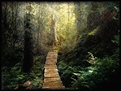 Into the Foggy Woods (h_roach) Tags: trees texture forest woods bravo path explore trail stump pacificnorthwest ferns blueribbonwinner intothelight fineartphotos abigfave theperfectphotographer azofdigitalediting paololivornosfriends