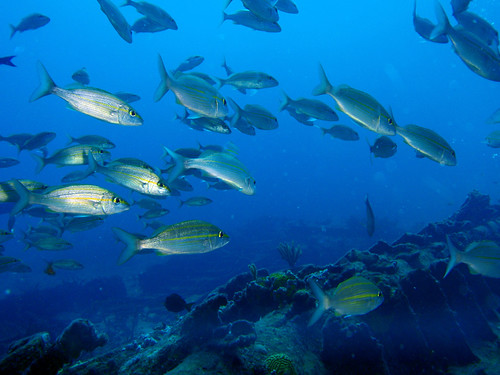 Shoal of fish swimming past