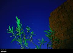 Star Trail 2 (Kyaw Photography) Tags: sky plants brick night canon eos star long exposure scene trail 450d