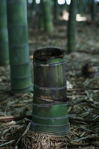 a bamboo stock