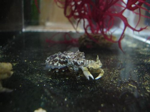 Crab Dinner!