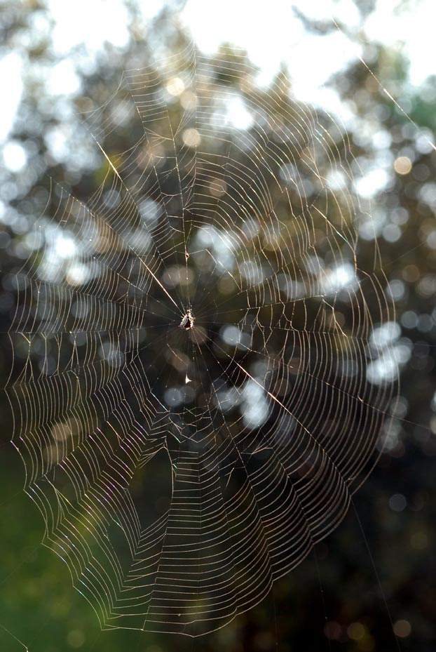 DSC_1210Sun-spider-web
