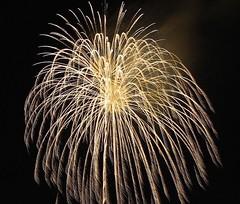 Gold Willow Falling (EpicFireworks) Tags: stars fireworks guyfawkes firework pyro 13g epic pyrotechnics sib