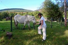 Kinlochard Scotland (bettyboop ek) Tags: horse scotland nikon hills trossachs lochard d40 kinlochard or4ngecrush bettyboopek