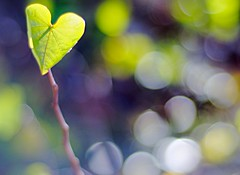 Peace at last  (fruitfulharvest1983) Tags: light tree fall 50mm leaf heart bokeh applejuice naturesfinest carbonfootprint explored faithfulflickrfriends welovehearts bokehwednesday ourmemoriesourtimes exquisitebokehs