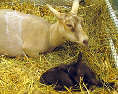 100 Things to see at the fair #12: Mother & Baby