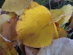 Ruduo (juokas) Tags: nature ruduo gamta lapai