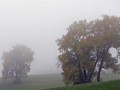 Novembertag (5) ... (Martin Volpert) Tags: tree fog germany deutschland nebel hessen árbol bäume allemagne niebla baum brouillard limes hesse pohlheim watzenbornsteinberg mavo43