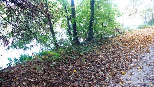 Along the River Aare by Feldbrunnen