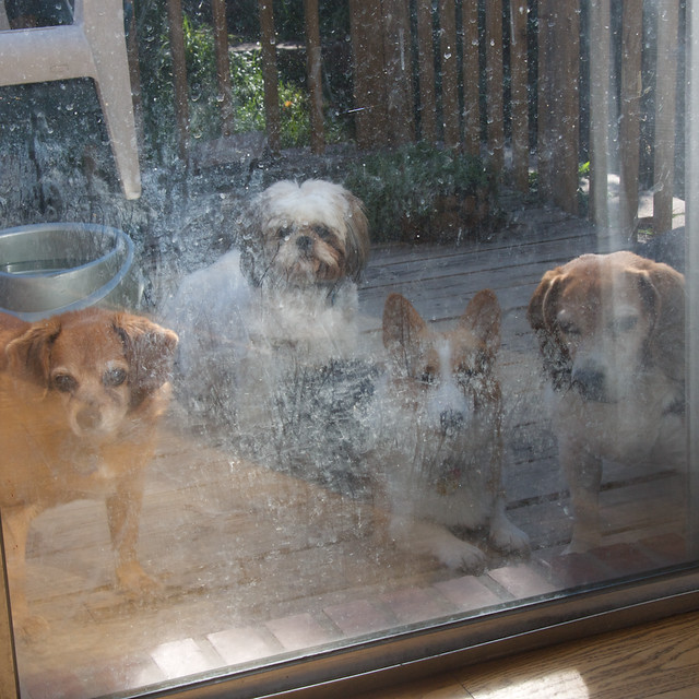 I really need to clean my patio door...
