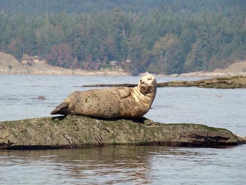 2008-10-11 Portland Island 123