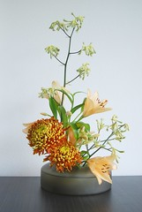 Ikebana 'Autumn colors' (Otomodachi) Tags: flowers autumn orange flower colors yellow japanese colours lily ikebana herfst lilies geel chrysanthemum bloemen flowerarrangement herfstkleuren oranje bloem japans chrysant kangaroopaws japaneseflowerarrangement bloemschikking schikking kangoeroepootjes