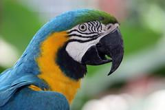 Parrot (Katka B.) Tags: sea colour bird nature animal islands spain erasmus bokeh parrot canarias atlantic espana tenerife canary 2008 islas llp fotocompetition fotocompetitionbronze