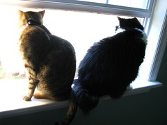 Maggie and Josie in the bedroom window