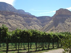 View of Book Cliffs from Canyon Wind Vineyard in Grand Junction (Grand Junction Visitor & Convention Bureau) Tags: mountain vineyard colorado wine wind scenic grand canyon cliffs junction grapes grandjunction bookcliffs vcb canyonwind