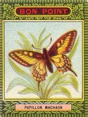 bon point papillon 1