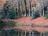 Automne (Yvan LEMEUR) Tags: automne landscape paysage reflets etang loireatlantique orvault