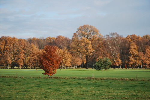 Dutch countryside in autumn