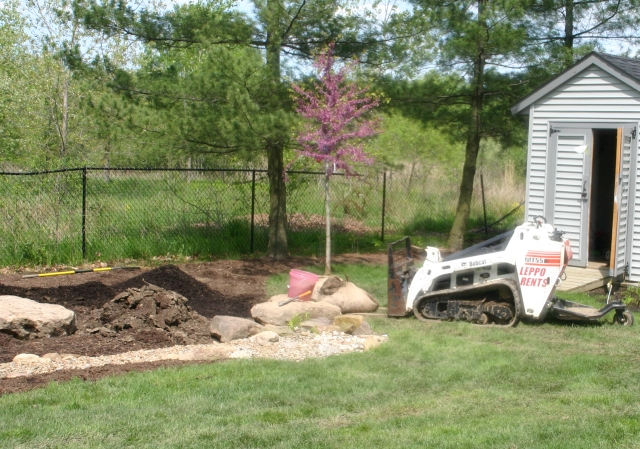 landscaping project - redbud tree