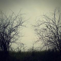 (Syka Lê Vy) Tags: trees black vietnam vy dreamer 2009 sleepwalker lê syka vắng fromsykawithlove letsstaylost sykalevy lehoangvy sundayspirit