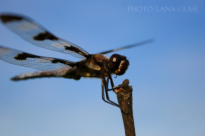 08-12-dragonfly1
