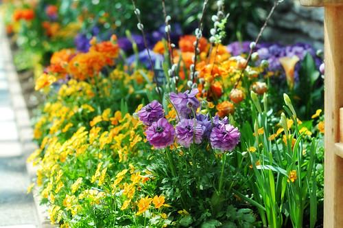 Como Park Conservatory 2010 Spring Flower Show