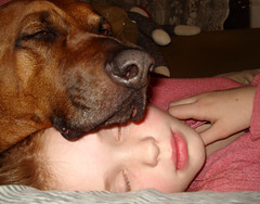Daisy & Mason, Sleeping :) (Max & Mason) Tags: love cozy mason warmth daisy redheads coonhound snuggly redbone explored sleepingtogether