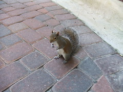 Friendly Squirrel from Florida
