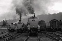 A4 Line Up NYMR LNER Gala. (FlyingScotsman4472) Tags: africa no south union shed sir a4 nigel bittern grosmont nymr lner gresley 60009 blackwhitephotos 60007 60019