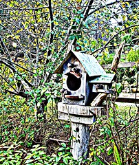 Time for another Birdhouse (craftedfromtheheart) Tags: nature forest birdhouse australia melbourne victoria inspire damncool blueribbonwinner beautifulcapture mywinners abigfave megashot citritbestofyours glenharrow flickrofhope craftedfromtheheart mtdandneong allmemorieswelcome maygibbssnugglepotandcuddlepie