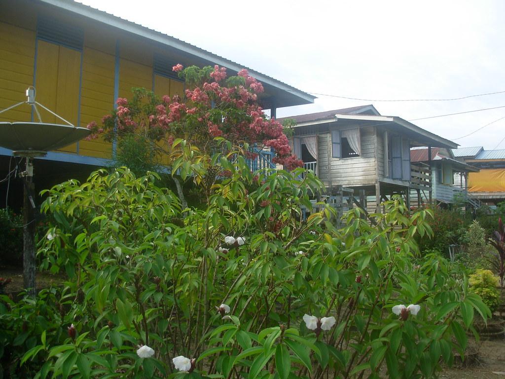Sarawak-Belaga (348)