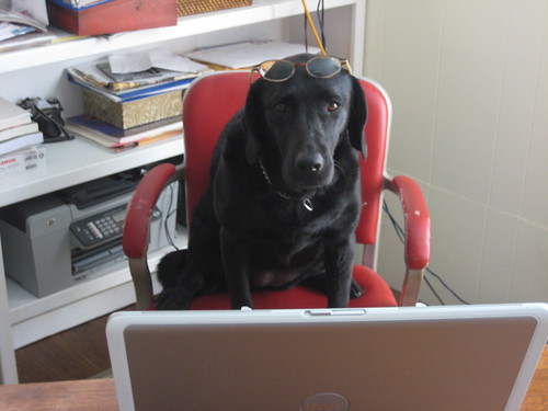 "It's ""Take Your Dog to Work Day"""