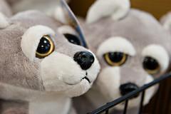 Big-Eyed Animals