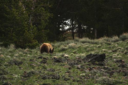 2656118845 95e1e07545 Yellowstone: El parque nacional más antiguo del mundo!