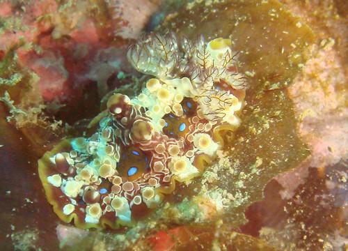 全身長滿球的海蛞蝓再度現身(3)