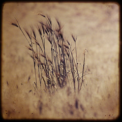 Cereals TTV (Mr.PartyHut ) Tags: nature natura cereals watcher grano spighe goldenglobe cereali ttv naturewatcher goldstaraward marcomatteucci magicdonkeysbest