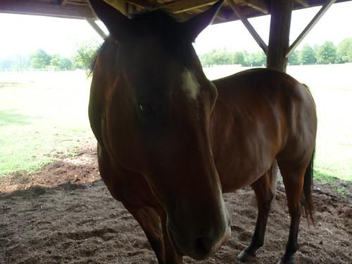 HorseFarm25.jpg by you.