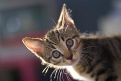 Crazy Kitten? // Nikkor 50mm 1.4