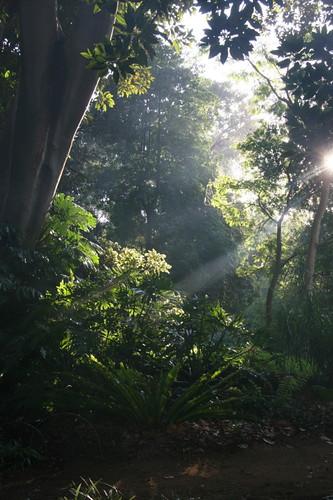 Botanic gardens - Adelaide