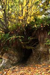 Le roots