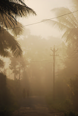 Misty mornings (Aditi Patnaik) Tags: morning mist silhouette wayanad anythingandeverything