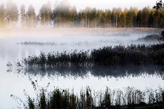 land misty morning beauty  Rob Watkins 2008 (Aland Rob) Tags: road autumn trees light sky sun mist lake color fall nature water beauty weather fog forest finland island mirror early still colours view like sunny calm estuary clear land inlet serene rushes archipelago drifting drift relections aland mariehamn shdow aaland godby guasdivinas