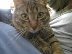 IMG_1587 (fadingembers) Tags: animals stormy kitties bigpurplehouse