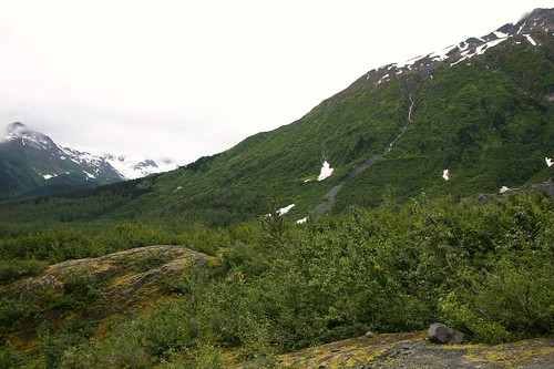 Exit Glacier Forest Succession