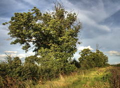 England, Bedfordshire: Wild Hedgerow (Tim Blessed) Tags: trees sky nature landscape countryside scenery hedgerow singlerawtonemapped